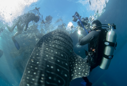Diving into the Heart of Southeast Asia